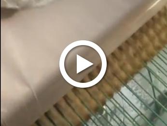 单饼机工作视频